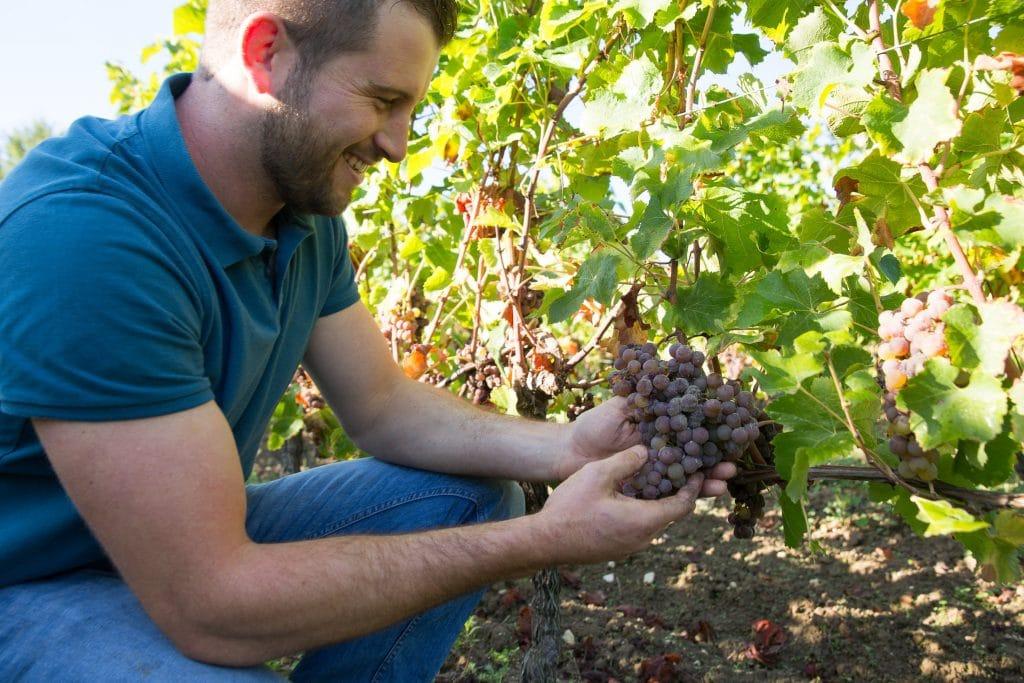 Guillaume dans les vignes, tenant une grappe de raisin